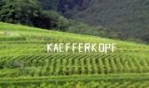Kaefferkopf